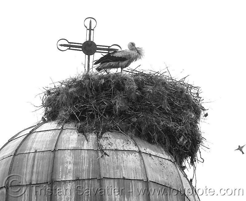 stork nest (bulgaria), cross, dome, roof, stork nest, wildlife, българия