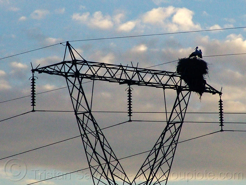 stork nest on transmission tower, backlight, birds, electric line, electricity pylon, high voltage, power transmission lines, silhouette, stork nest, storks, wild bird, wildlife, wires