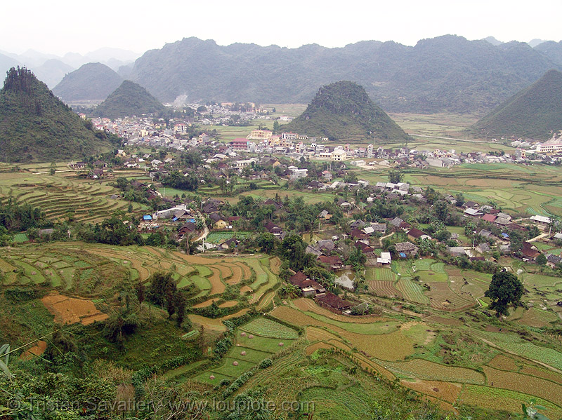 Tám Sơn - fields - terrace farming - vietnam, agriculture, rice paddy fields, terrace farming, terraced fields, tám sơn, vietnam