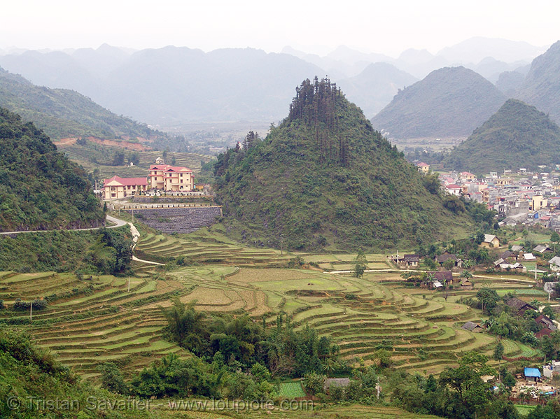 Tám Sơn - terrace farming - rice fields - vietnam, agriculture, rice paddies, rice paddy fields, terrace farming, terraced fields, tám sơn, vietnam