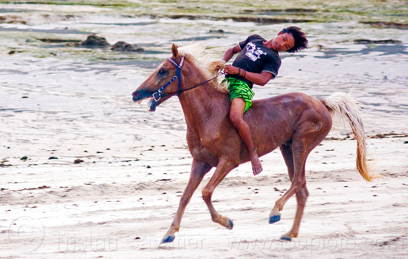 teenager riding his horse bareback on the beach (indonesia), bare feet, bareback riding, beach, boy, bridle, gallop, galloping, horse riding, horse tack, horseback riding, indonesia, lombok, man, reins, rider, running, skinny, yougster