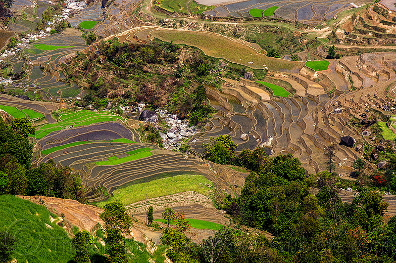 terrace farming - paddy fields (nepal), agriculture, rice fields, river, terrace fields, valley