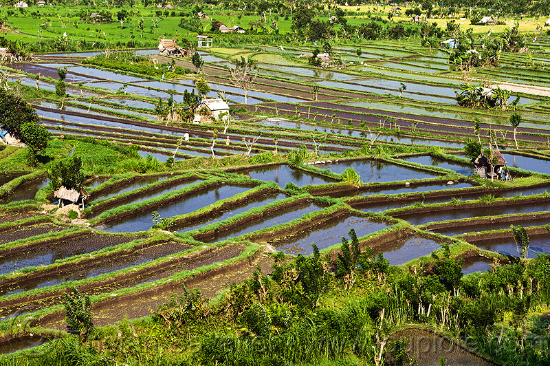 Image gallery terrace agriculture for Terrace farming definition