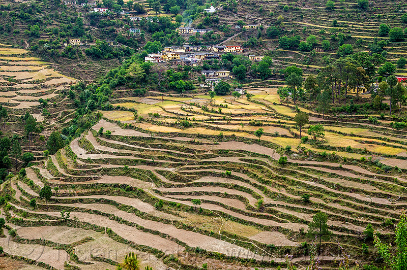 terraced fields in the bhagirathi valley (india), agriculture, bhagirathi valley, hill, houses, india, mountains, slope, terrace farming, terraced fields, village