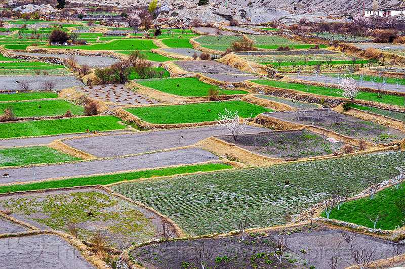 terraced fields in the himalayas (nepal), agriculture, annapurnas, kali gandaki valley, mountains, offerings, terrace farming, terraced fields