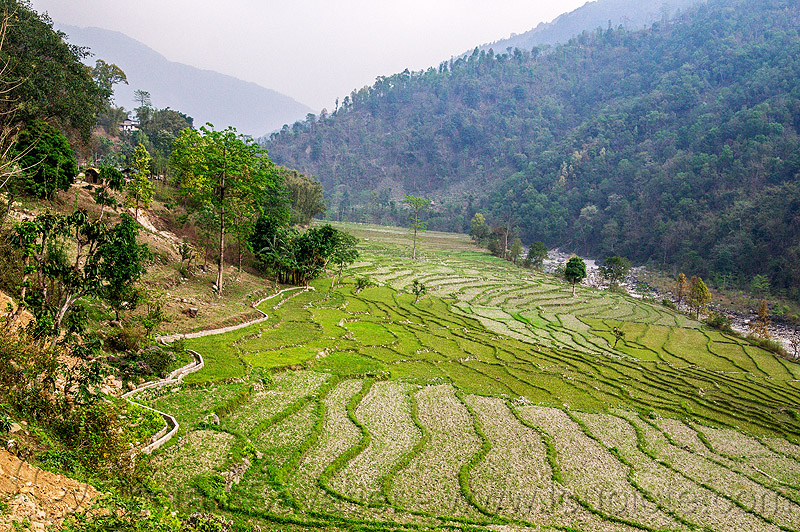 terraced fields in sikkim (india), agriculture, india, sikkim, terrace farming, terraced fields, valley