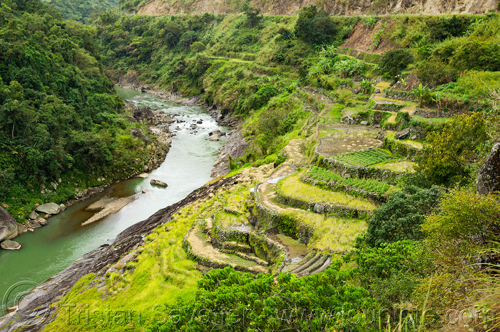 terrace fields in steep valley (philippines), agriculture, chico river, chico valley, cordillera, philippines, rice fields, rice paddy fields, river bend, terrace farming, terrace fields