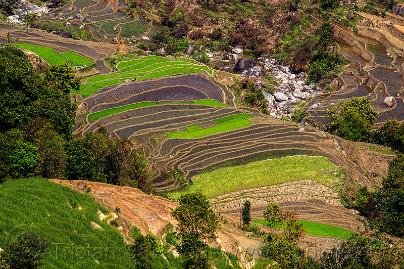 terraced fields - paddy fields (nepal), agriculture, rice paddies, rice paddy fields, terrace farming, terraced fields, valley