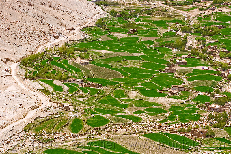 terrace fields, upper chemrey valley - road to pangong lake - ladakh (india), aerial photo, agriculture, chemrey valley, dry stone walls, green, ladakh, rice paddy fields, terrace farming
