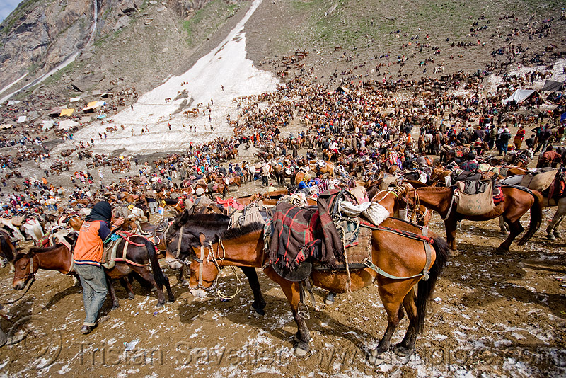 ponies and porters - amarnath yatra (pilgrimage) - kashmir, amarnath yatra, bearer, crowd, horses, kashmir, kashmiris, mountains, pilgrimage, pilgrims, ponies, pony station, snow, trekking, yatris, अमरनाथ गुफा