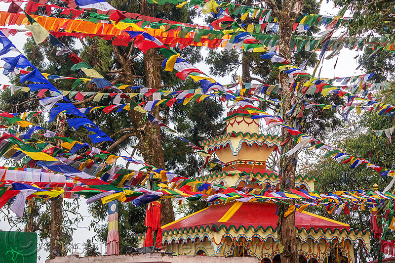 tibetan prayer flags - observatory hill - darjeeling (india), buddhism, darjeeling, hindu temple, hinduism, india, observatory hill, prayer flags, tibetan, trees