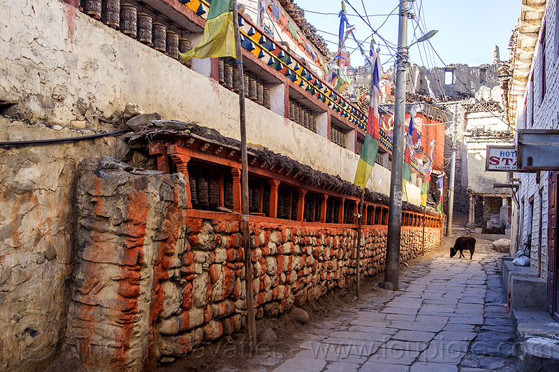 tibetan prayer wheels in kagbeni village (nepal), annapurnas, buddhism, cow, kagbeni, kali gandaki valley, prayer mills, prayer wheels, tibetan, village