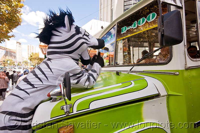 traffic zebra on dodge bus hood - la paz (bolivia), bus, cnn ireport, costume, dodge, la paz, lorry, pedestrian crossing, street, traffic zebra, truck