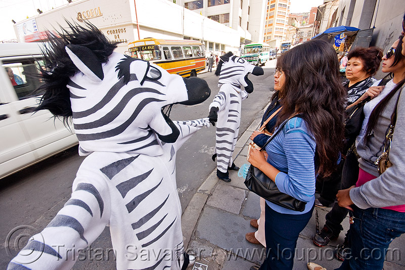 traffic zebras - la paz (bolivia), cnn ireport, costume, la paz, pedestrian crossing, traffic zebra