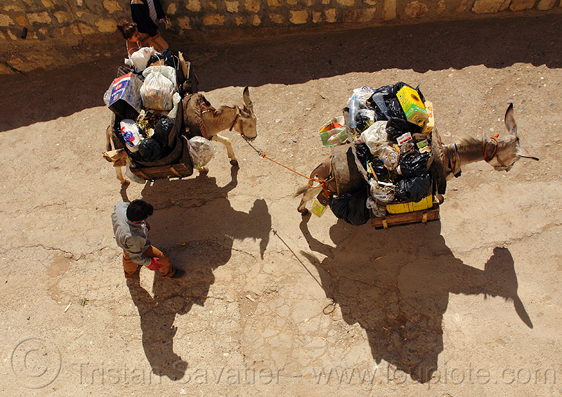 trash pickup donkeys, asinus, donkeys, equus, garbage pickup, man, mardin, rubbish, shadows, trash pickup, working animals