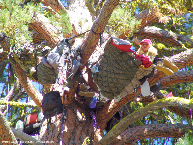 tree-camp-closeup - rainbow gathering - hippie, hippie, tree branches, tree camp, tree sitters