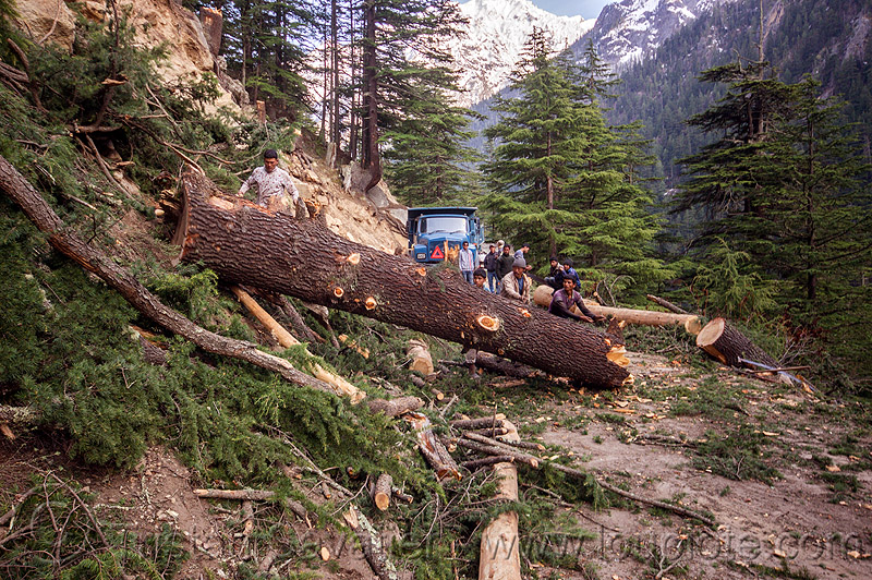 tree logging (india), bhagirathi valley, lumberjacks, men, mountain road, mountains, rolling, tree log, tree logging, truck, trunk, workers, working