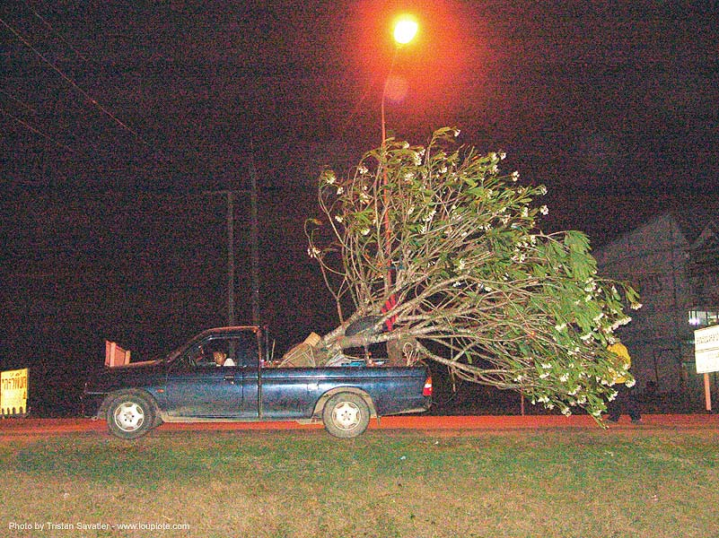tree mover - thailand, night, pickup truck, thailand, tree mover