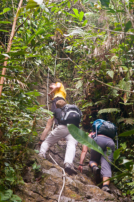 trekking on mulu pinnacle summit trail (borneo), borneo, climbing, erosion, geology, gunung mulu national park, hiking, jungle, knotted rope, limestone, malaysia, pinnacles, rain forest, rock, trekking