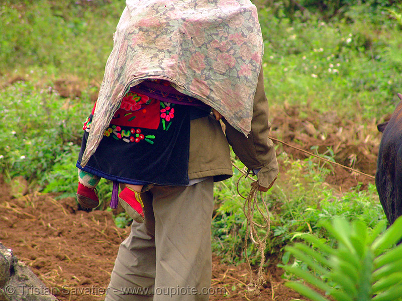 tribe dad carrying baby on his back - vietnam, hill tribes, indigenous, infant, people