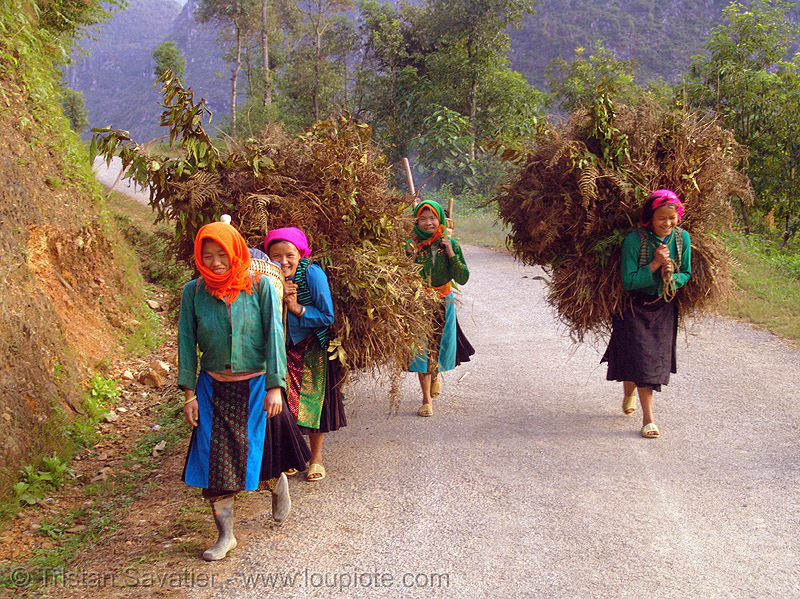 tribe girls carrying huge bundles of grass on the road - vietnam, asian woman, asian women, backpacks, colorful, green hmong, hill tribes, hmong tribe, indigenous, road, vietnam