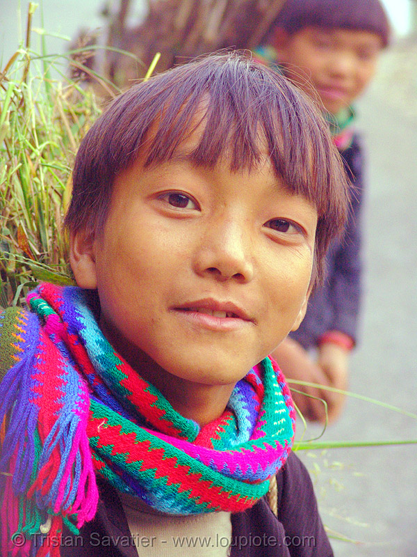 tribe kids carrying grass - vietnam, boys, child, hill tribes, indigenous, kid, ma pi leng, ma pi leng pass, mã pí lèng, mã pí lèng pass, people