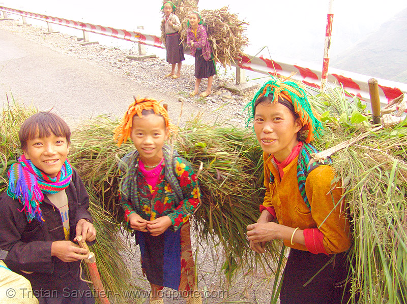 tribe kids carrying grass - vietnam, boys, children, girls, hill tribes, indigenous, kid, little girl, road, tribe girl