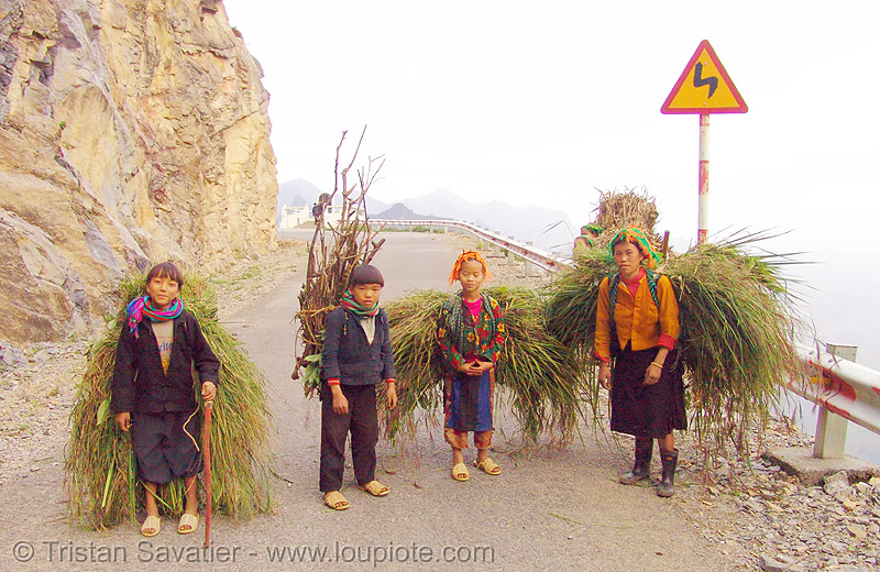 tribe kids carrying grass - vietnam, asian woman, asian women, boys, children, hill tribes, indigenous, kids, little girl, ma pi leng pass, mã pí lèng pass, road, tribe girls