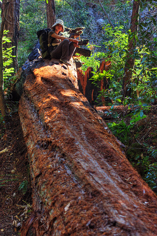 trunk of fallen redwood, backpack, backpacking, big sur, fallen tree, pine ridge trail, redwood tree, resting, sequoia sempervirens, sharon, sitting, tree bridge, tree trunk, trekking, vantana wilderness, woman