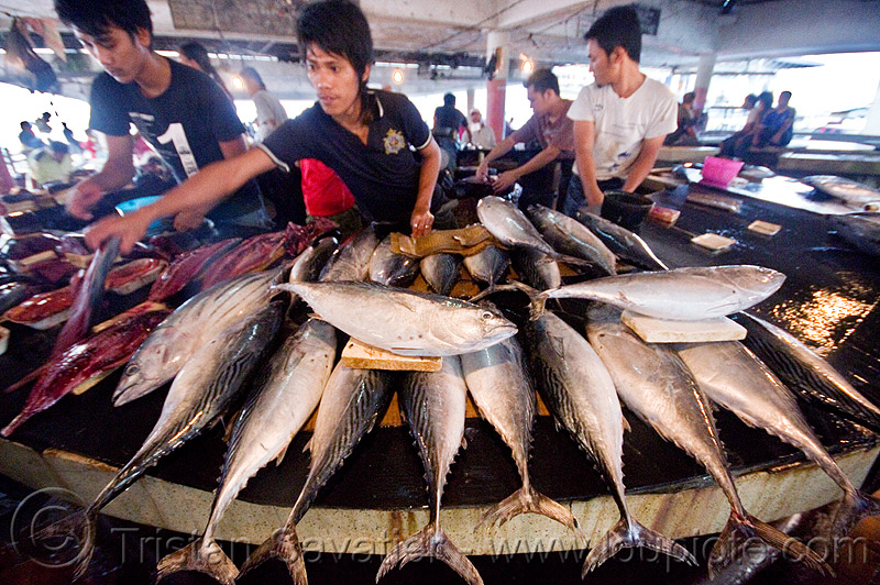 tuna fish stall at fish market, borneo, fish market, fishes, lahad datu, malaysia, men, merchant, tuna, vendor