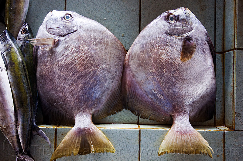 two round fishes, fish market, food, seafood