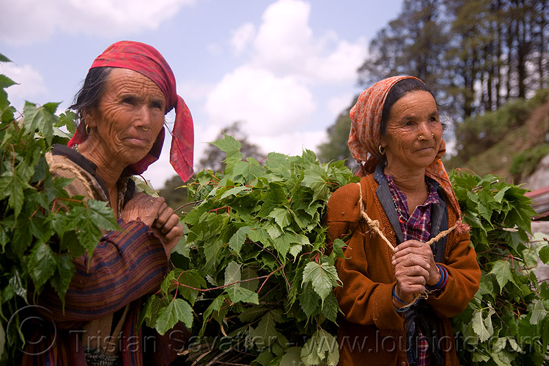 two women carying leaves - jalori pass (india), jalori pass, jalorila, leaves, women