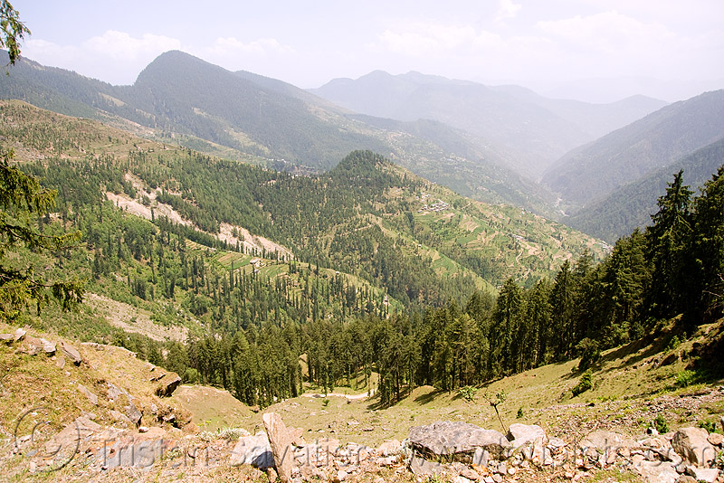 view from jalori pass (india), forest, jalorila, mountain pass, mountains, valley