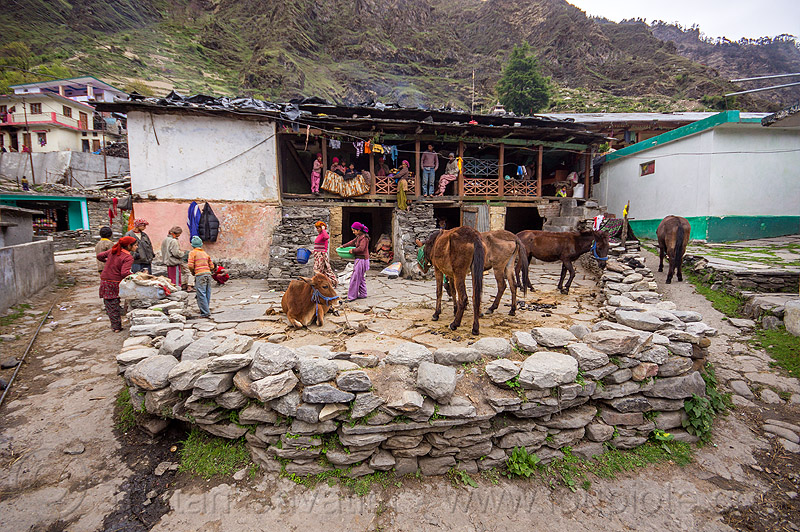 village house and livestock (india), cow, horses, janki chatti, mountains, people