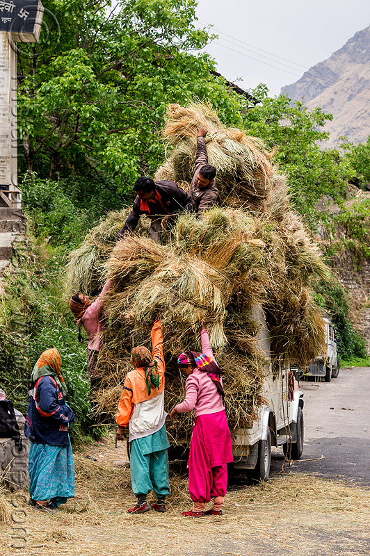 villagers loading hay on mahendra jeep (india), car, cargo, dhauliganga valley, freight, load, men, mountains, overloaded, raini chak lata, road, women