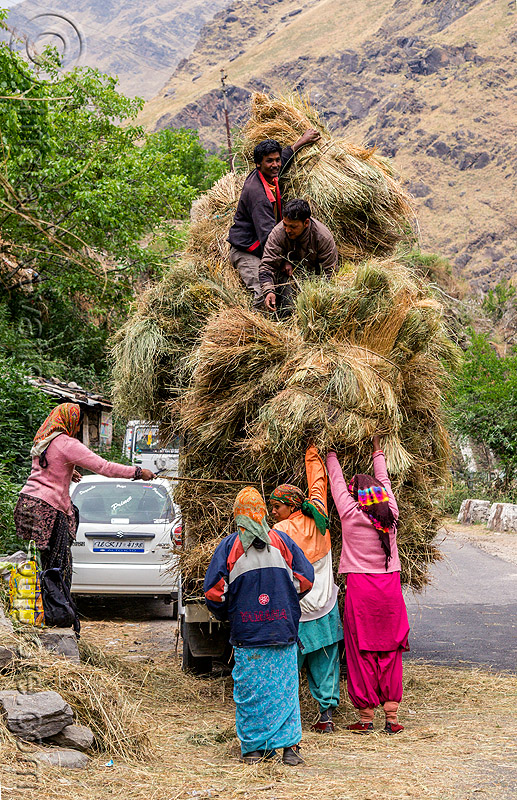 villagers loading hay on overloaded mahendra jeep (india), car, cargo, dhauliganga valley, freight, hay, india, jeep, load, loading, mahindra, men, mountains, overloaded, raini chak lata, road, women