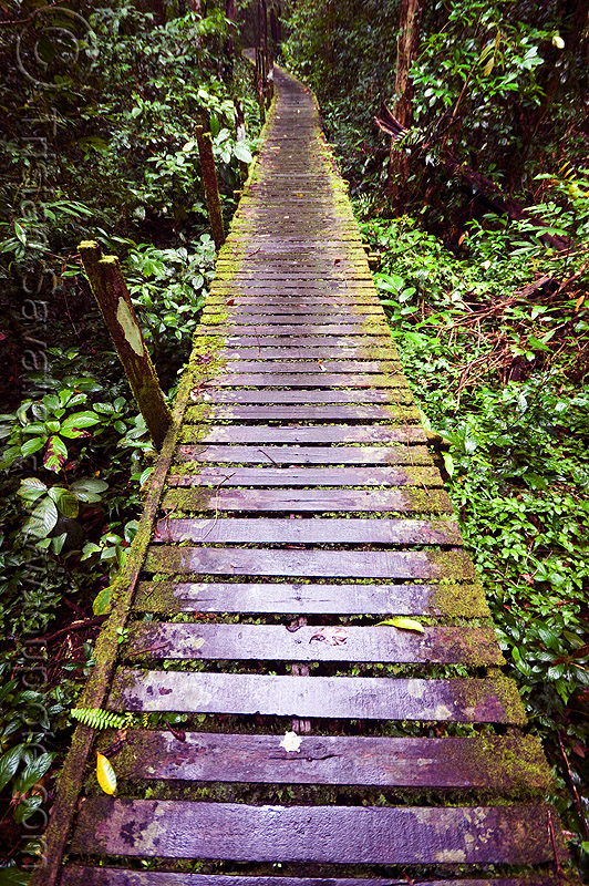 walkway in the jungle (borneo), forest, mossy, niah, niah caves, pathway, perspective, rain forest, slippery, vanishing point, wood