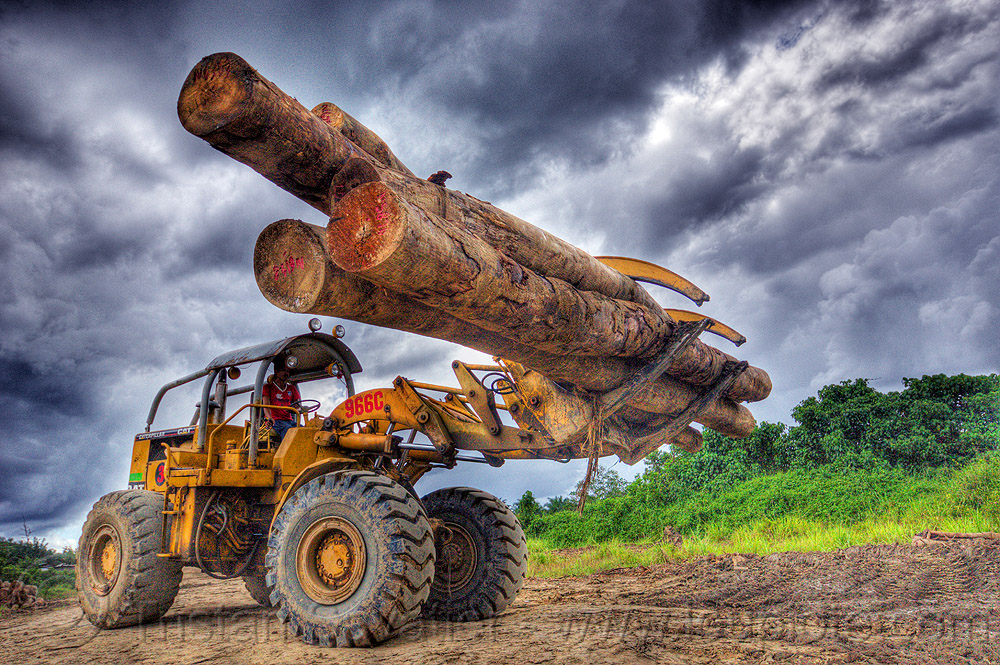 wheel loader moving tree logs, at work, borneo, cat 966c, caterpillar 966c, clouds, cloudy sky, deforestation, environment, front loader, logging camp, logging forks, malaysia, tree logging, tree logs, tree trunks, wheel loader, working, yellow