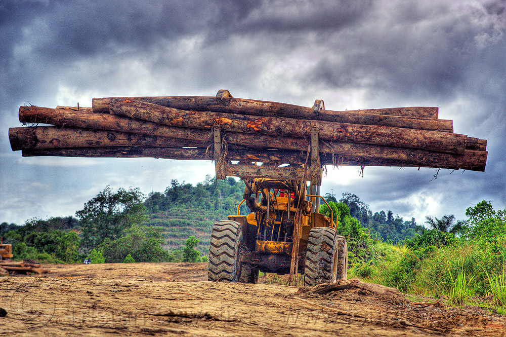 wheeled loader with logging fork moving tree logs, at work, cat 966c, caterpillar 966c, clouds, cloudy sky, deforestation, environment, front loader, heavy equipment, hydraulic, logging camp, logging forks, machinery, tree logging, tree logs, tree trunks, wheeled loader, working, yellow