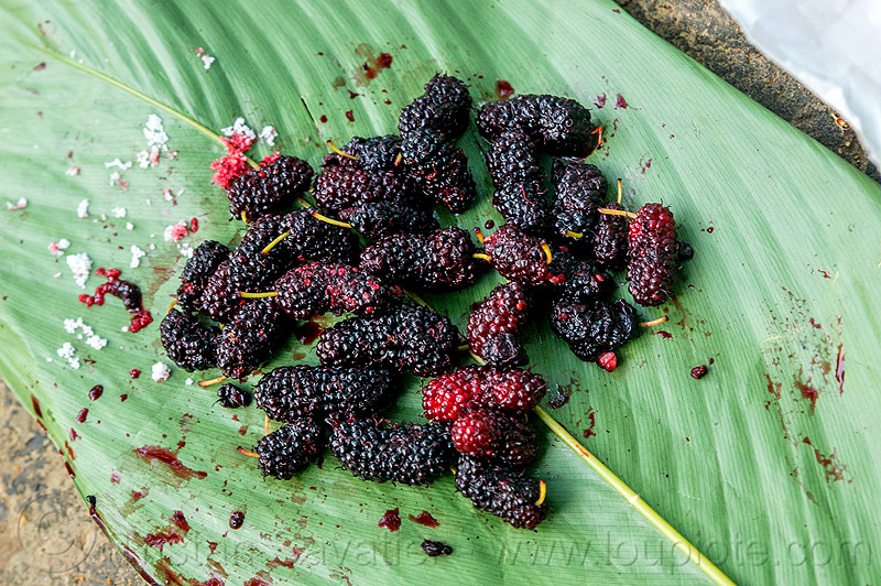 wild mulberries (india), berries, east khasi hills, food, fruits, india, leaf, mawlynnong, meghalaya, morus, mulberries