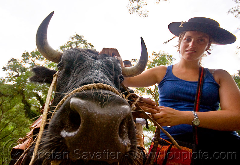 woman with bull - mercedes margan, cow, cow nose, cow snout, hat, head, horns, noroeste argentino, salta, san lorenzo