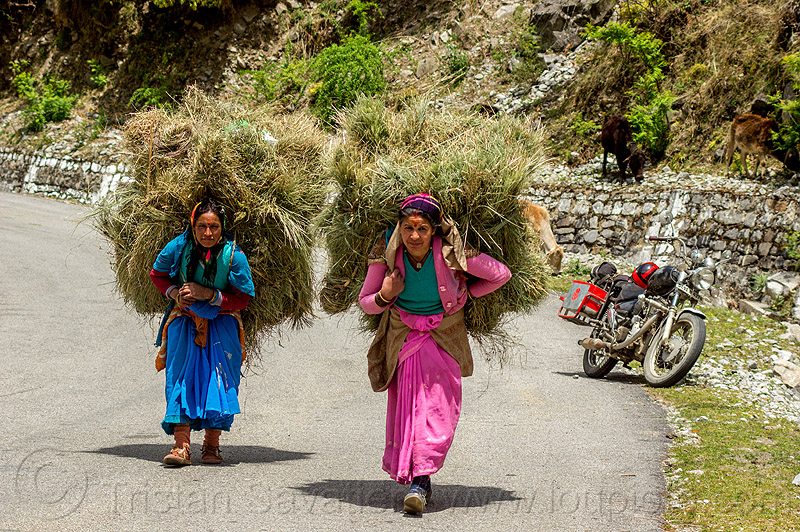 women carrying big bundles of hay on their back (india), alaknanda valley, bundle, carrying, hay, india, motorcycle touring, mountains, road, royal enfield bullet, women