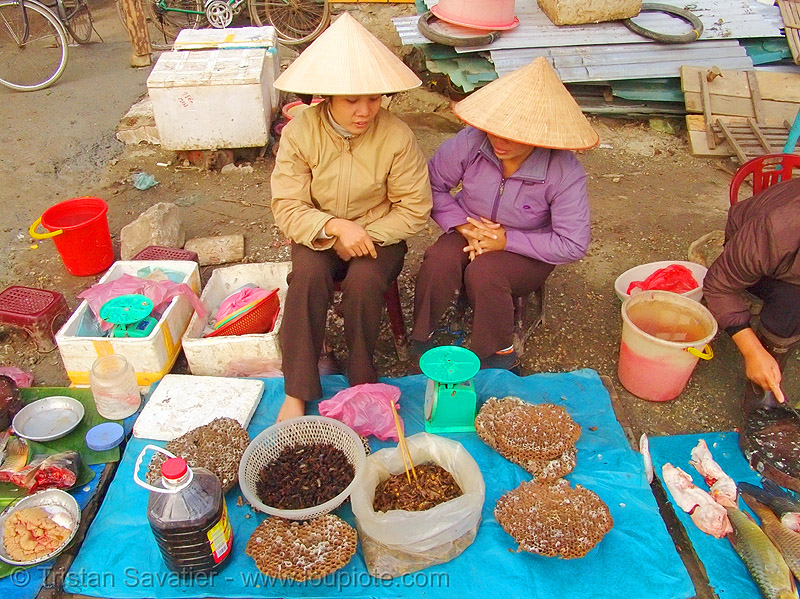 women selling bees and wasps on the market - vietnam, beehives, bees, cao bằng, edible bugs, edible insects, entomophagy, food, merchant, stall, street market, street seller, vendor, vietnam, wasps