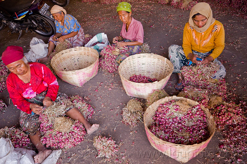 women working in shallot bulk market, allium cepa, baskets, bulk market, foodstuff, indonesia, produce market, rattan, shallots, sitting, vegetable, veggie, women, working
