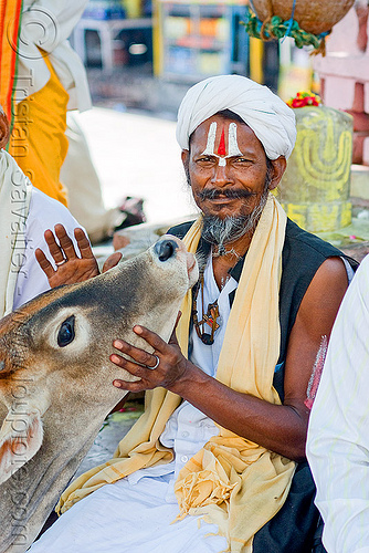 baba (hindu holy man) with cow - orchha (india), baba, beard, cow, hindu holy man, hinduism, india, orchha, ramanandi tilak