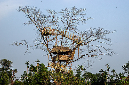 bamboo tree house - mawlynnong (india), bamboo, east khasi hills, mawlynnong, meghalaya, tree house