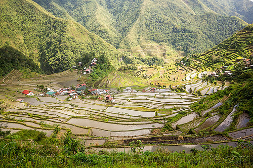 batad rice terraces near banaue (philippines), agriculture, banaue, batad, flooded, philippines, rice paddies, rice paddy fields, terrace farming, terraced fields, valley, village