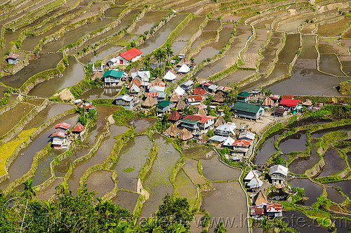 batad village on rice terraces near banaue (philippines), agriculture, banaue, batad, philippines, rice fields, rice paddy fields, terrace farming, terrace fields, valley, village