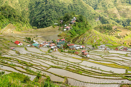 batad village - rice terraces near banaue (philippines), agriculture, banaue, batad, flooded, philippines, rice paddies, rice paddy fields, terrace farming, terraced fields, valley, village