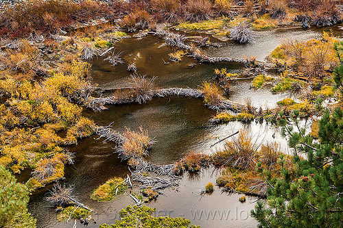 beaver dams in lundy canyon (california), beaver dam, california, eastern sierra, lake, lundy canyon, river, tree branches, tree limbs, valley, water